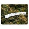 Etykiety pętlowe, szkółkarskie, pętelki do oznaczania roślin, 1,7x20cm, białe, 2 tyś. szt.